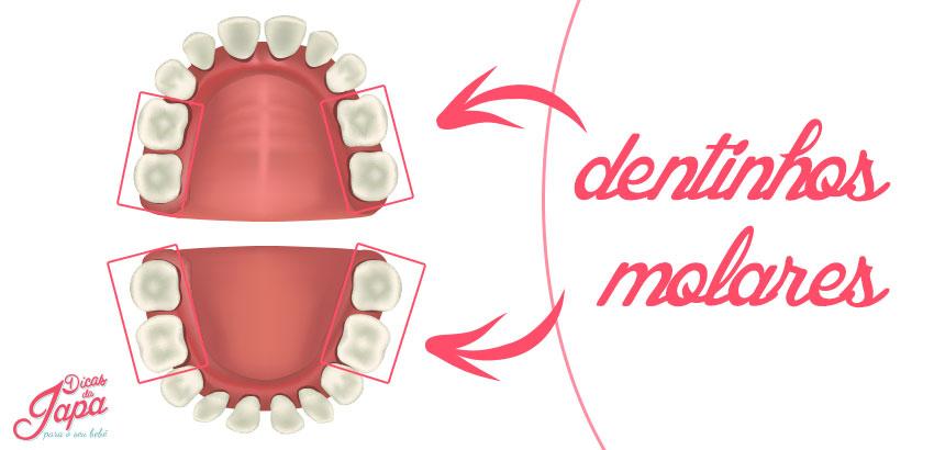 higiene-bucal-molares