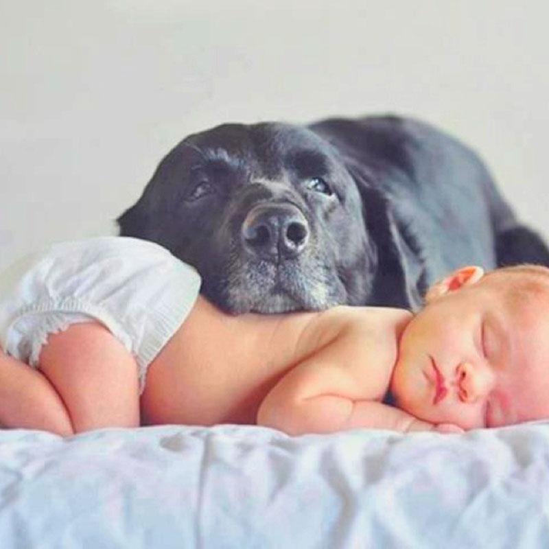bebê com cachorrinho