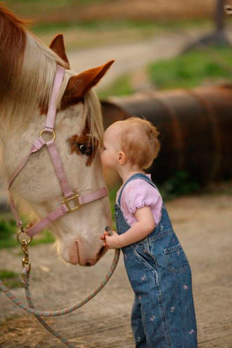beijo no cavalo