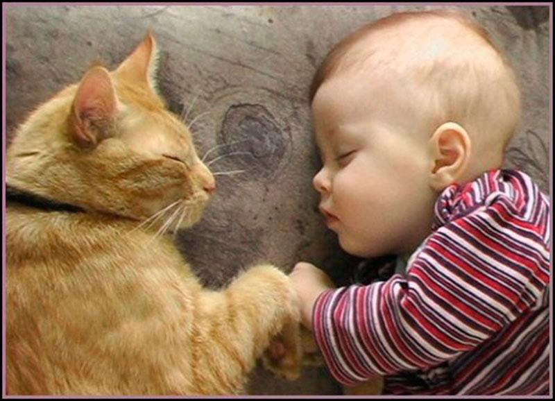 dormindo juntinho