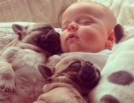 41 ideias de fotos de bebê com animais de estimação